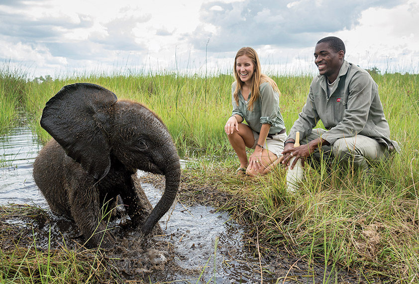 safari booking agent